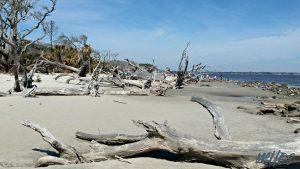 Driftwood-Beach-Jekyll-Island-The-Island-Directory